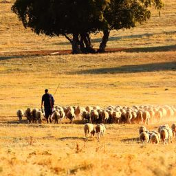 A Shepherd's Vision